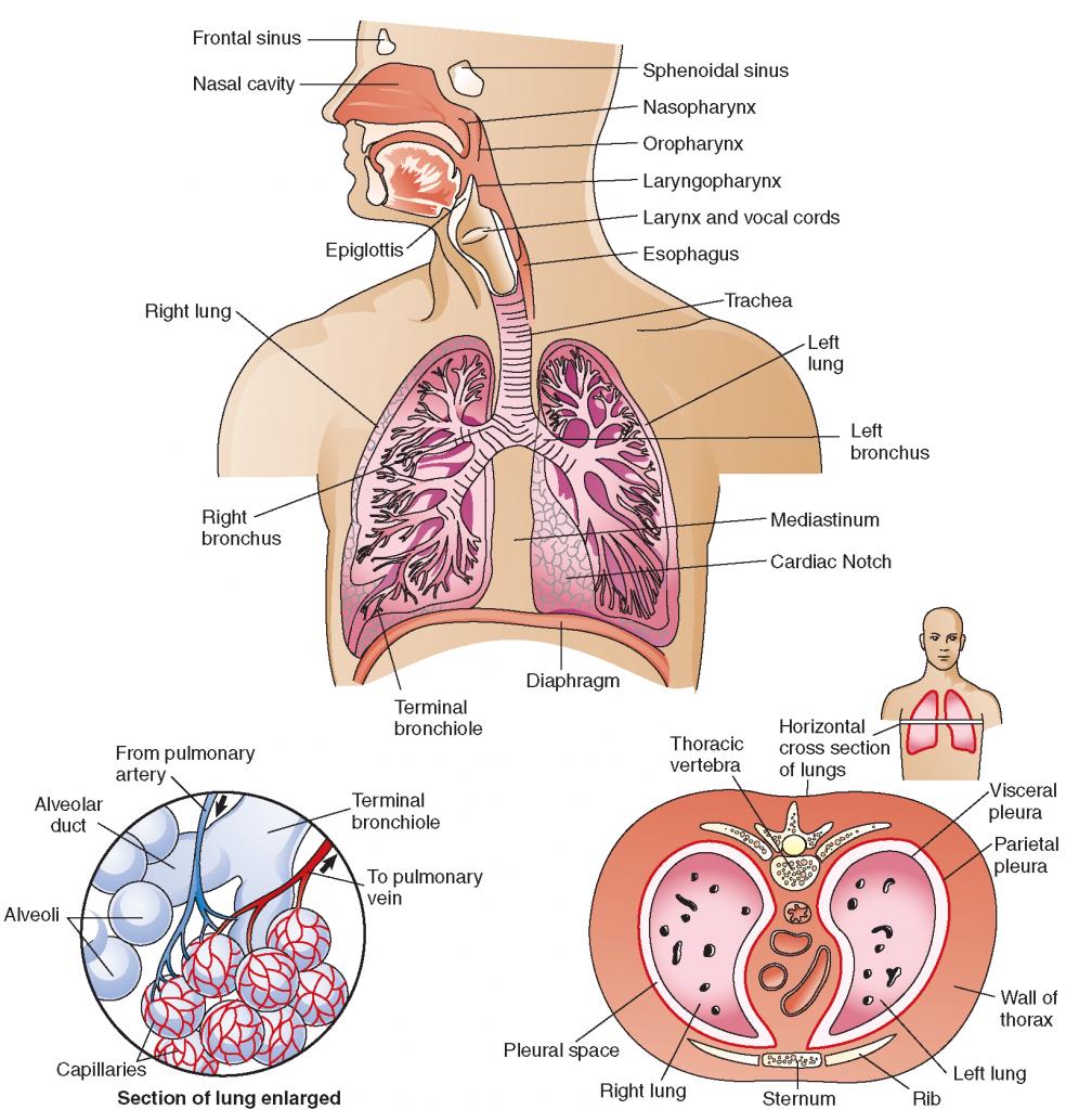 bronichal asthma
