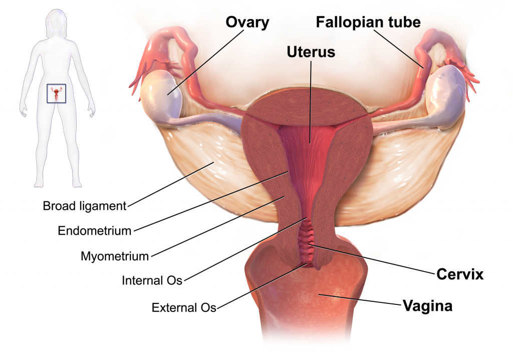 Herbal treatment for ovarian cysts