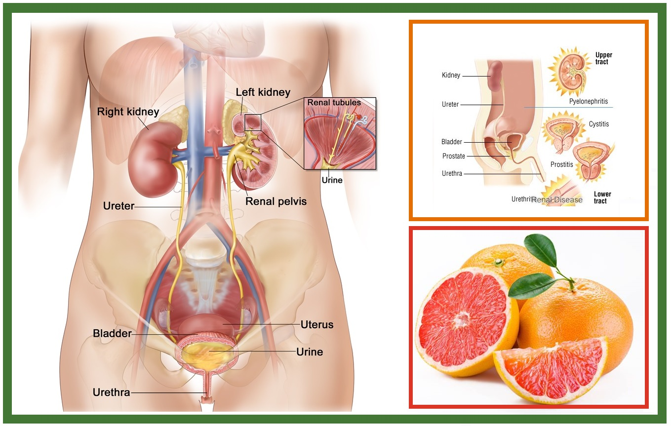 Ayurvedic Treatment of Urinary Tract Infection