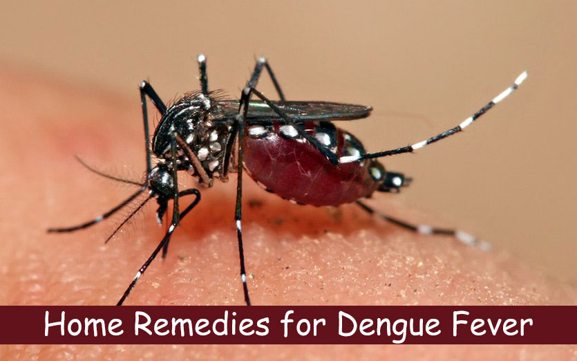 Home-Remedies-for-Dengue