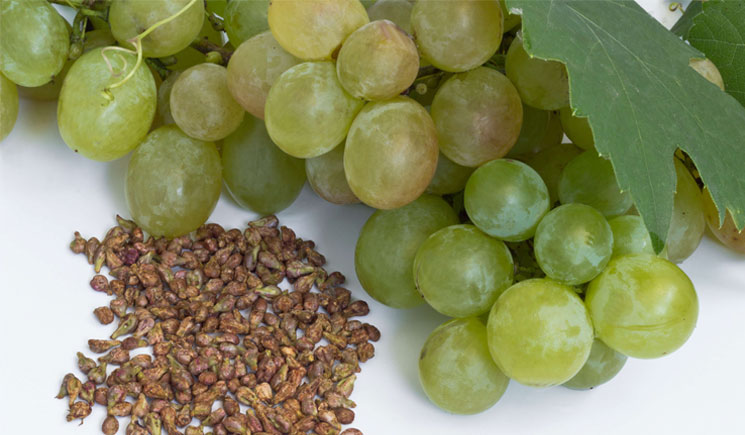 grape-seeds