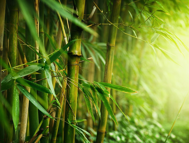 Health Benefits of Bamboo Plant