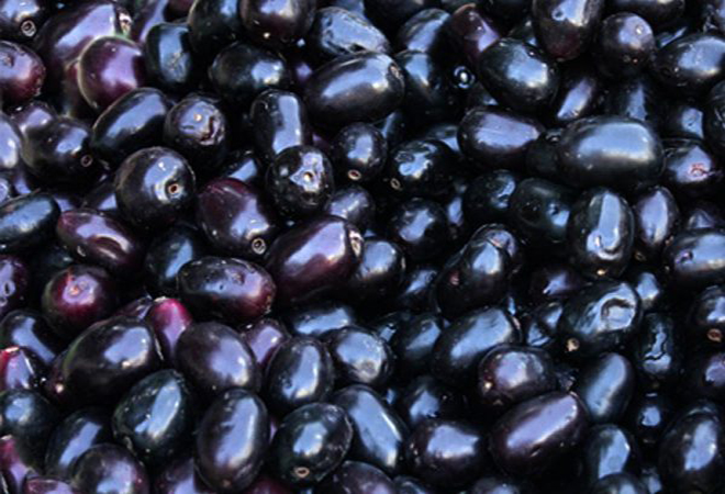 Health Benefits of Indian Blackberry