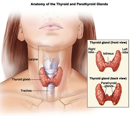 thyroid-disease